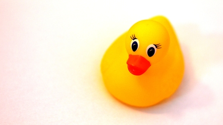 ducky: Yellow rubber ducky Stock Photo