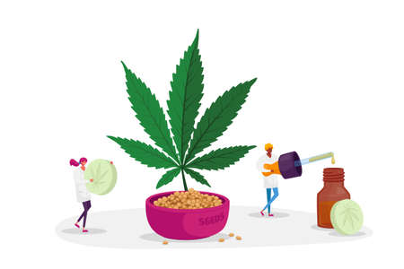 Alternative Cbd Medication, Light Drugs. Scientist or Pharmacist Characters Produce Oil and Pills of Medical Cannabis