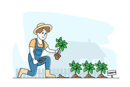 Woman Farmer or Cottager Character Working in Garden Digging Soil and Planting Tomato Sprouts to Ground, Care of Plants 矢量图像