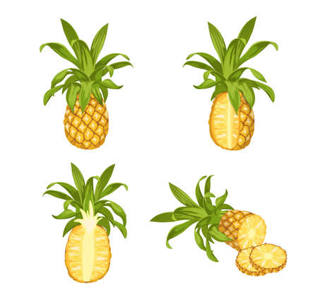 Pineapple Tropical Plant. Whole, Half and Sliced Natural Exotic Fruit With Juicy Pulp. Ripe Healthy Organic Product