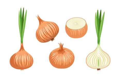 Set Onion Vegetable, Natural Garden Plant, Veggies Culture. Healthy Farm Production Organic Ripe Bulb With Brown Husk