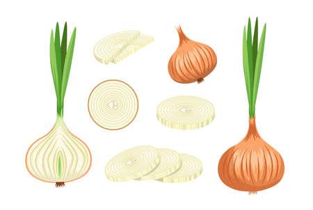 Set of Onions with Brown Husk, Eco Farm Production. Natural Plant, Garden Vegetable, Veggies Healthy Food, Ripe Bulb Ilustração