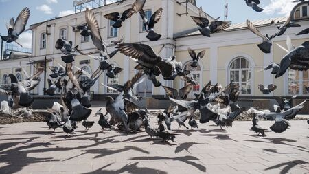 a flock of pigeons go to the landing