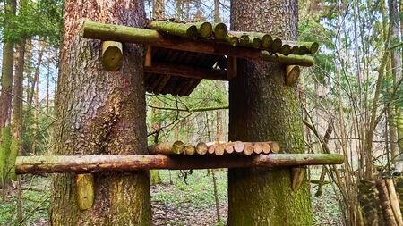 homemade bird feed in wild forest