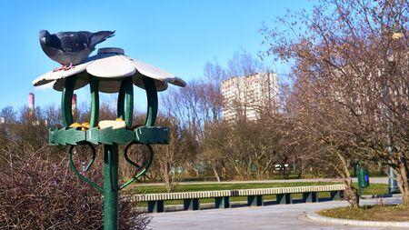 bird feeder in the lilac garden of moscow east