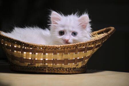 White kitten lies in a wicker basket