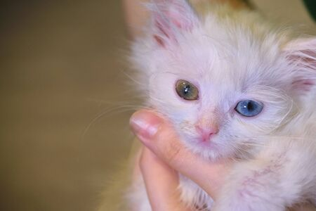 white kitten on hand color