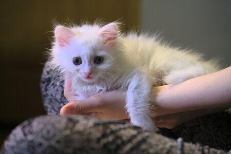white kitten sits on his knees