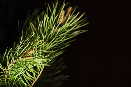 branch ate on a black background