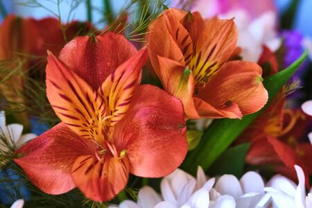 Close-up Large Beautiful bouquet of mixed flowers. Flower background and Wallpaper. Floral shop concept . Beautiful fresh cut bouquet. Flowers delivery color Banque d'images