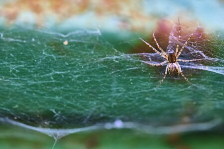 Spider sits on a web macro general plan