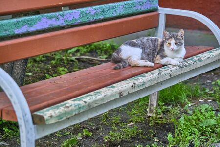 street cat lies on a bench near the house