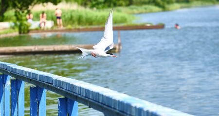 White bird takes off from the wharf