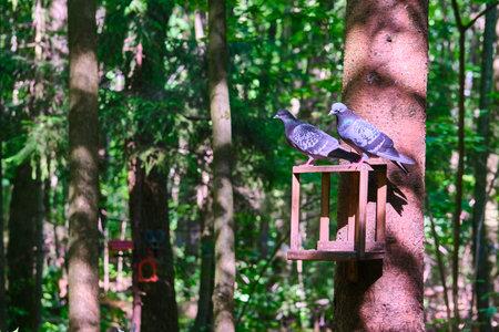 bird feeder in the city park. general plan