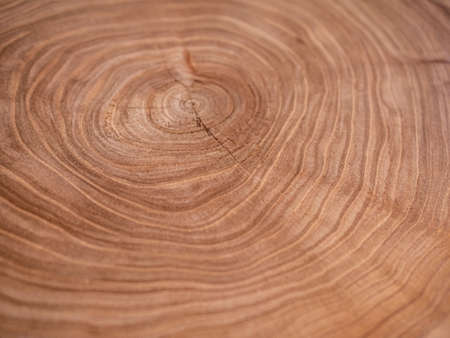 Cross section of a very old tree with countless tree rings demonstrative of age. Large circular piece of wood cross section with concentric tree ring texture pattern and cracks