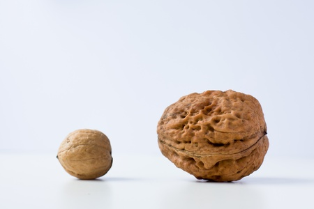 Small and large walnuts on a white background Stock Photo