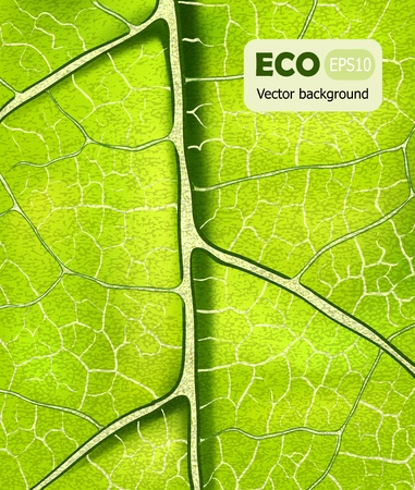 photosynthesis: eco bright green leaf vector texture background