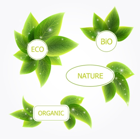 Abstract vector natural banners with green leafs