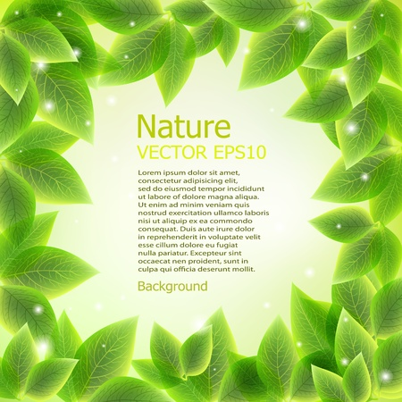 bright fresh green leaves border vector background Illustration