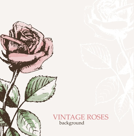 hand drawn rose: Vintage roses background