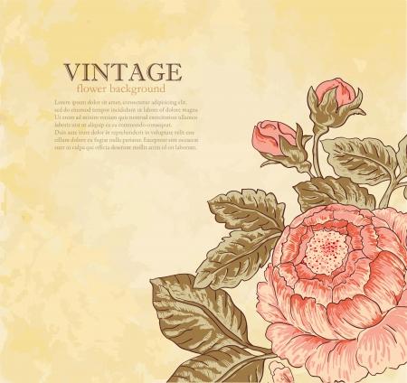 rose garden: vintage flower on grunge background Illustration