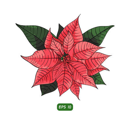 Poinsettia flower background for invitation  card Illustration
