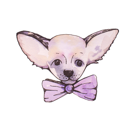 Stylised watercolor portrait chihuahua with pink bow Stock Photo