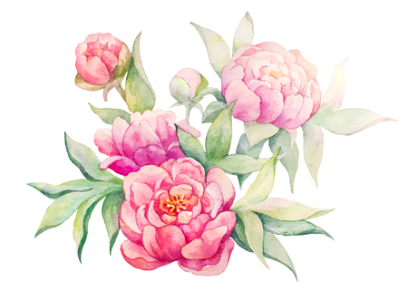 Watercolor flowers illustration. Isolated composition.