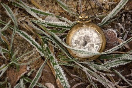 freezy grass and clocks
