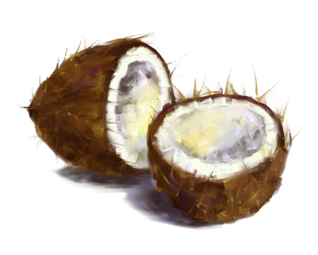 vector isolated coconut - drawn by oil paints Illustration