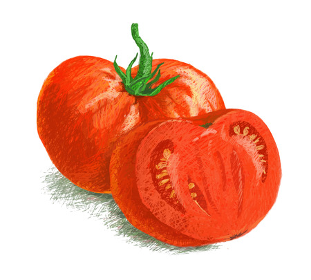 tomato slice: vector isolated tomato with slice - drawn by colored pencils on white background Illustration