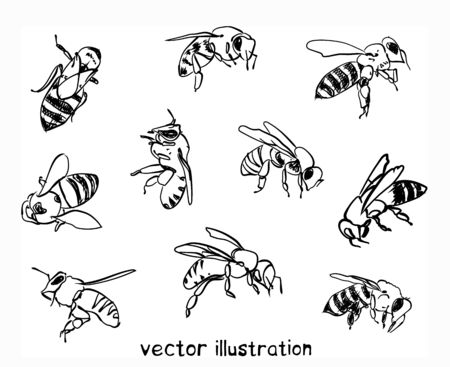 Contour sketch of bees. Vector set for design