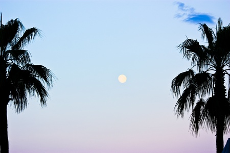 Beautiful view of Full moon with palm trees on the foreground Stock Photo - 10100134