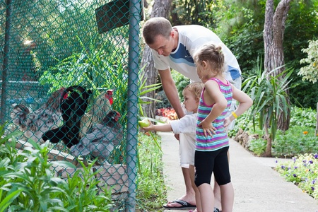 Child feeding cocks in the zoo with family photo