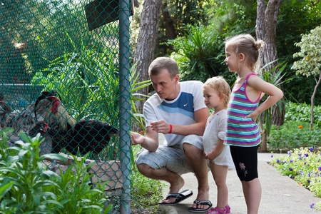 cute young farm girl: Family feeding cocks  in the zoo outdoor Stock Photo
