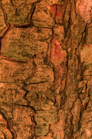 Bark of tree, wooden texture background Stock Photo - 21138215