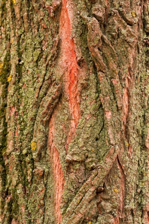 Bark of tree, wooden texture background Stock Photo - 21138216