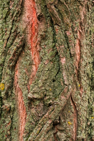 Bark of tree, wooden texture background Stock Photo - 21420429