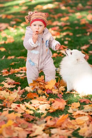 Cute little baby playing with the dog in autumn leaves. First autumn