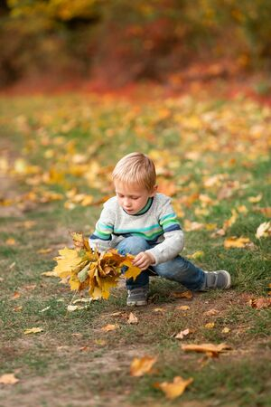 Happy little boy gathering autumn leaves in the park in autumn