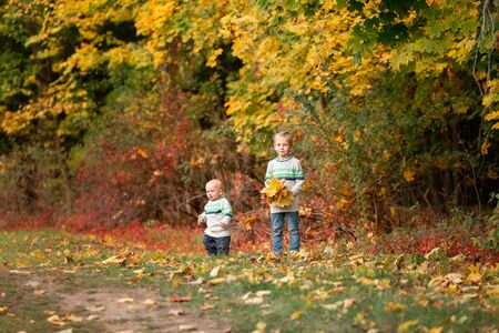 Happy little boys gathering autumn leaves in the park in autumn