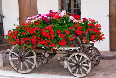 Old-fashionedtrolley  covered with flowers geranium Imagens