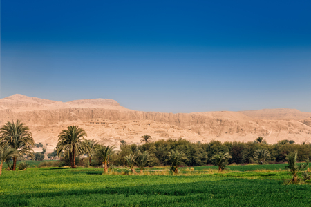 Bright green fields contrast with blue sky and  the dry yellow desert mountains in Luxor, Egypt 写真素材