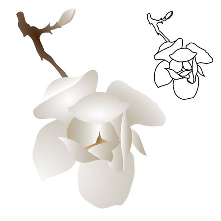 Magnolia-tree flower isolated on white background. Contour silhouette of a flowering branch. Vector illustration