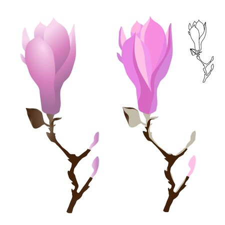 Magnolia flower on a branch of gently pink color. Contour and monochrome cartoon drawing. Vector illustration