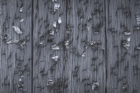 Old wooden noticeboard studded with rusty nails and paper clips with scraps of old papers. Background of old cracked and shabby boards. Texture splash