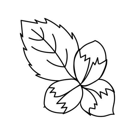 Stylized black outline of hazelnuts on a white background. EPS 10