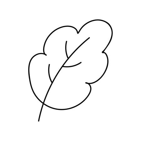 Black outline of a tree leaf on a white background. Vector. Doodling