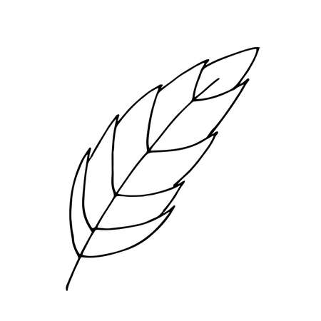 Black outline of a tree leaf on a white background.