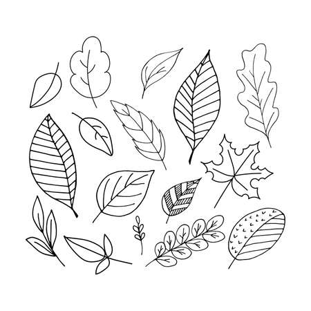 Set of black contour leaves on a white background. Vector. Doodling
